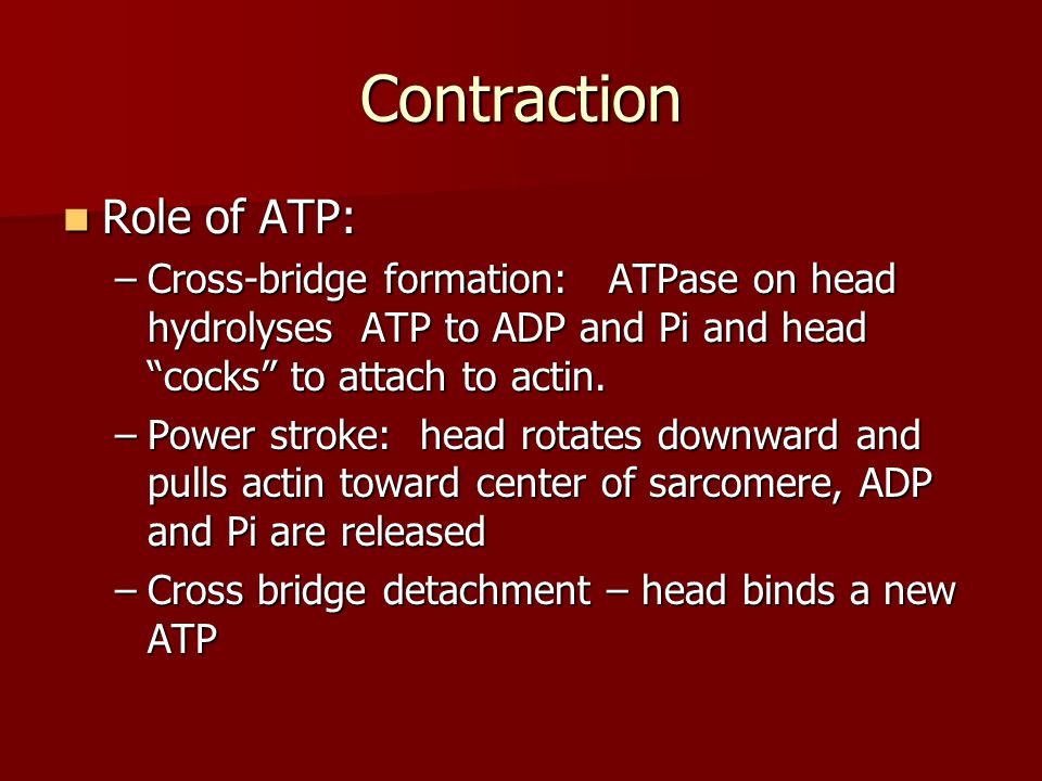 Contraction Role of ATP: