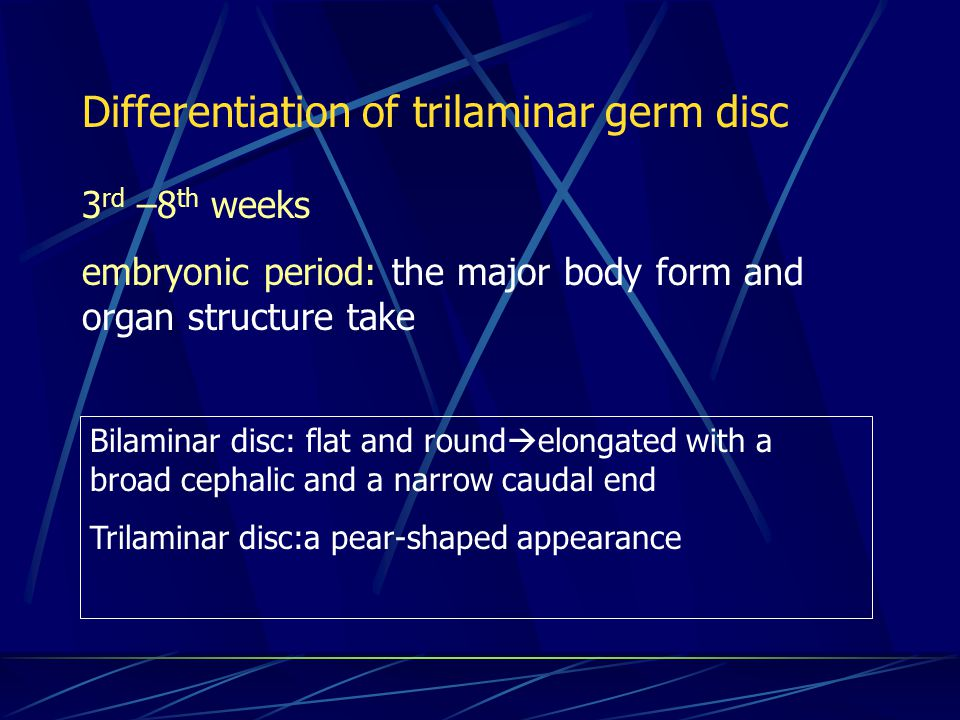 Differentiation of trilaminar germ disc