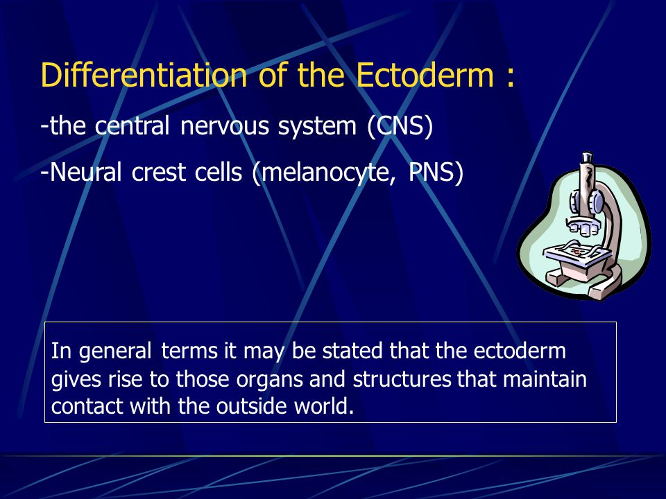 Differentiation of the Ectoderm :