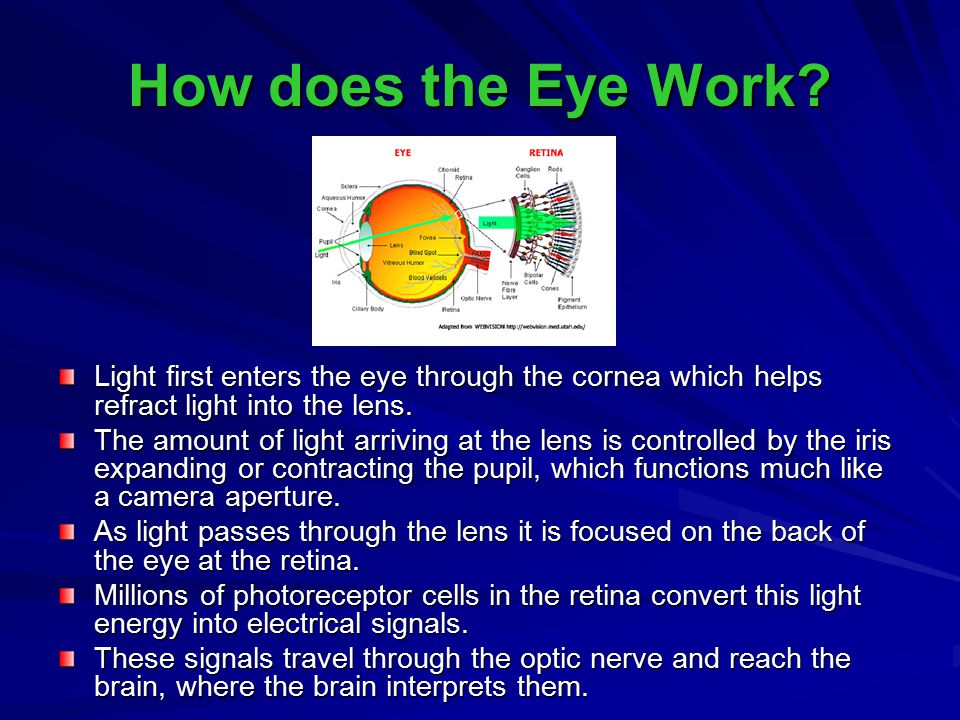 How does the Eye Work Light first enters the eye through the cornea which helps refract light into the lens.