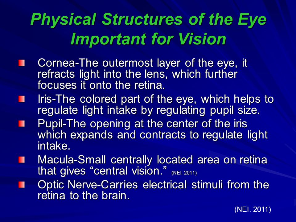 Physical Structures of the Eye Important for Vision
