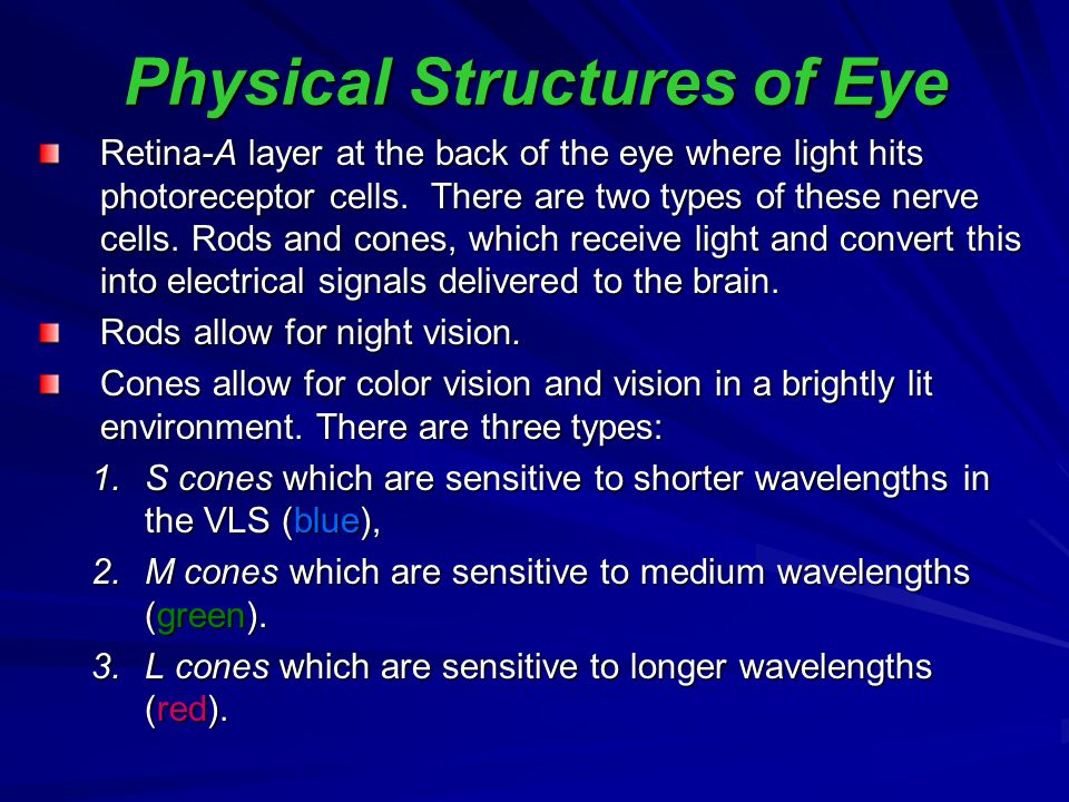 Physical Structures of Eye