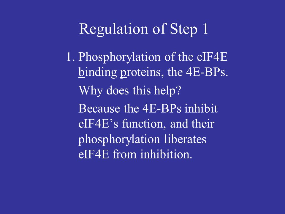 Regulation of Step 1 1. Phosphorylation of the eIF4E binding proteins, the 4E-BPs. Why does this help