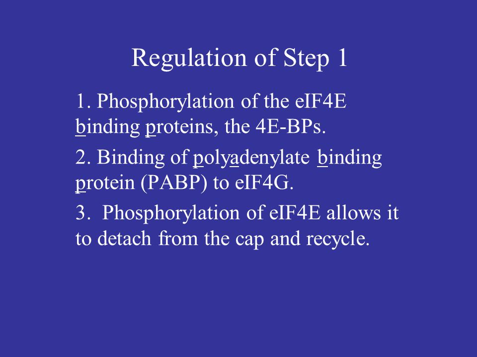 Regulation of Step 1 1. Phosphorylation of the eIF4E binding proteins, the 4E-BPs.