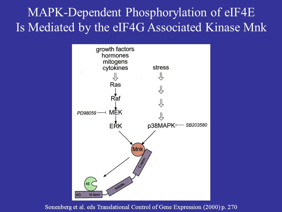 MAPK-Dependent Phosphorylation of eIF4E