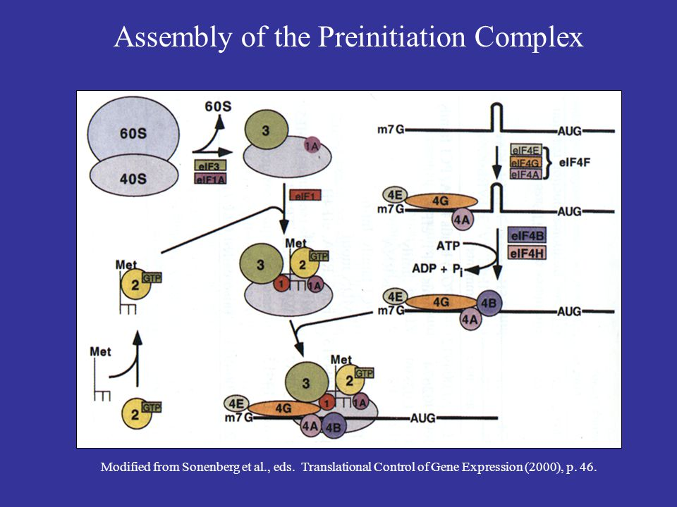 Assembly of the Preinitiation Complex