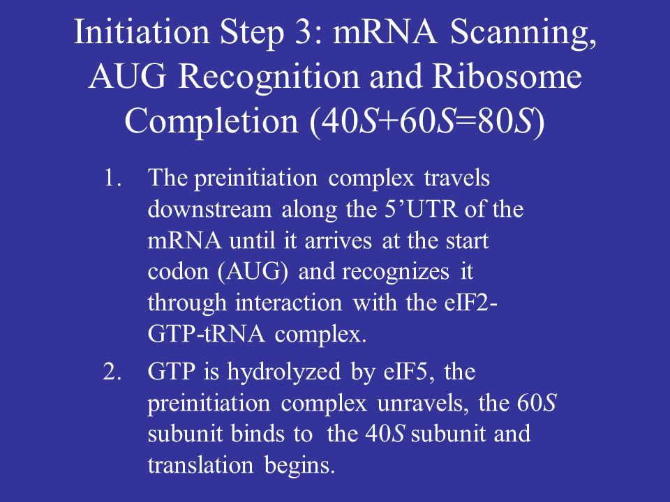 Initiation Step 3: mRNA Scanning, AUG Recognition and Ribosome Completion (40S+60S=80S)