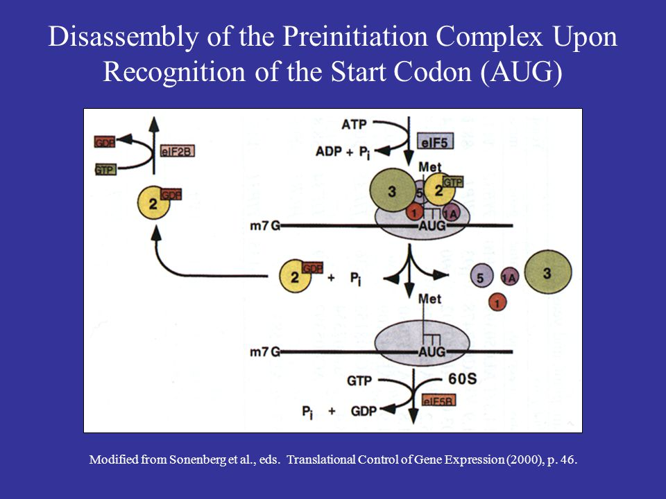 Disassembly of the Preinitiation Complex Upon Recognition of the Start Codon (AUG)
