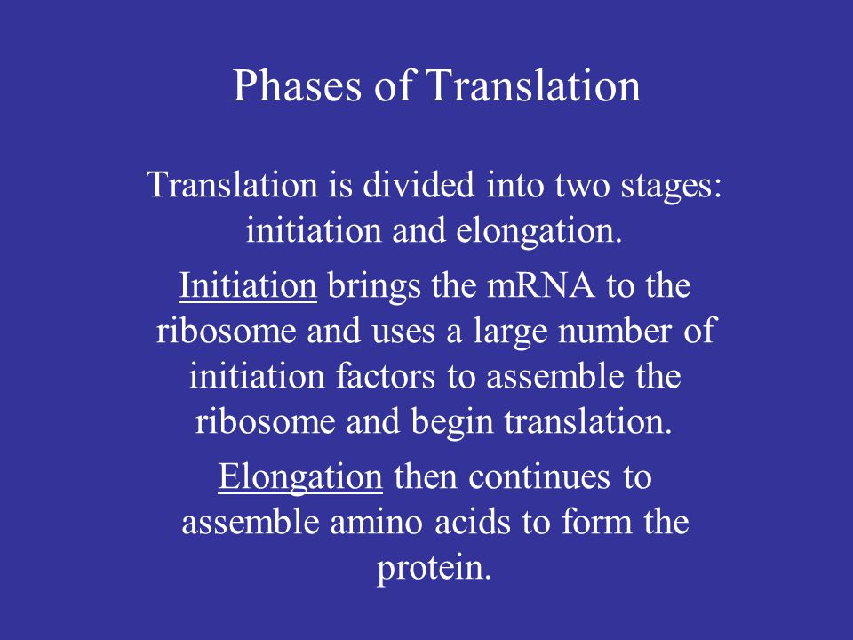 Phases of Translation Translation is divided into two stages: initiation and elongation.
