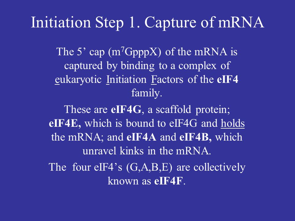 Initiation Step 1. Capture of mRNA