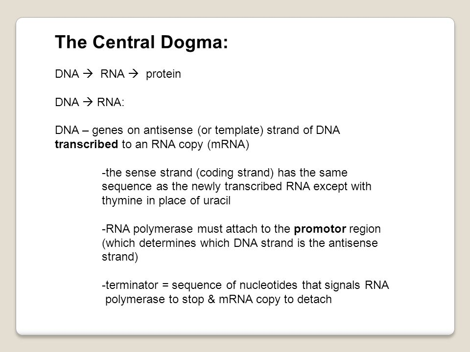 The Central Dogma: DNA  RNA  protein DNA  RNA: