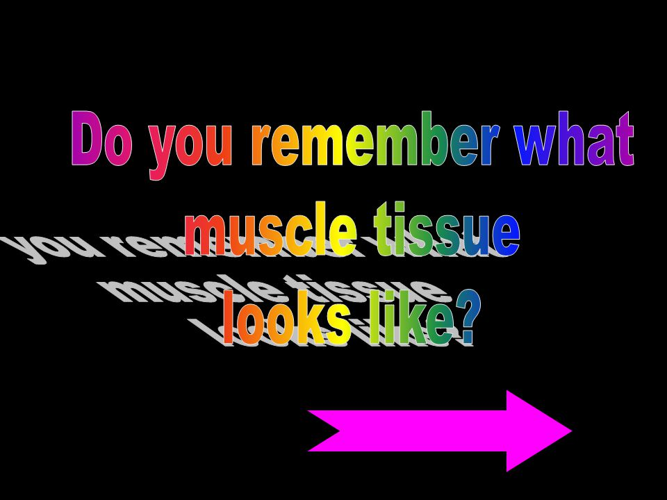 Do you remember what muscle tissue looks like
