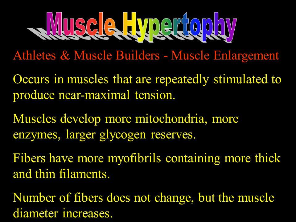 Muscle Hypertophy Athletes & Muscle Builders - Muscle Enlargement