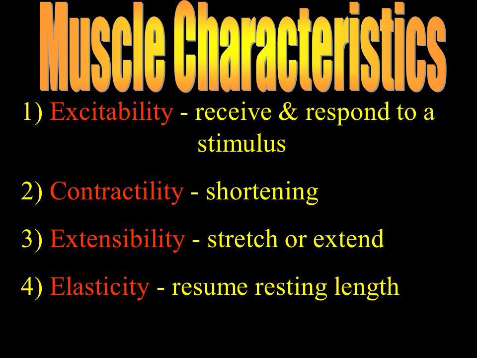 Muscle Characteristics