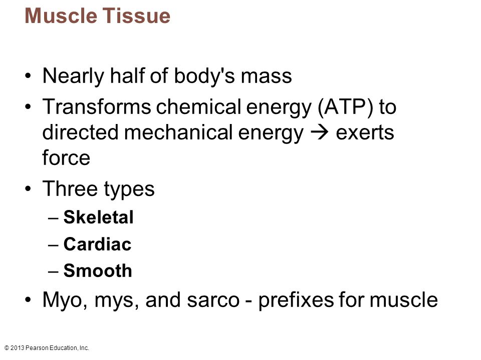 Nearly half of body s mass