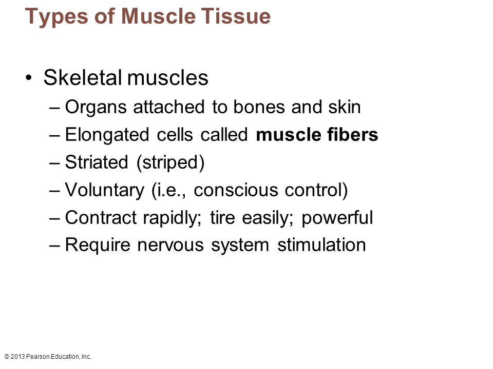 Types of Muscle Tissue Skeletal muscles