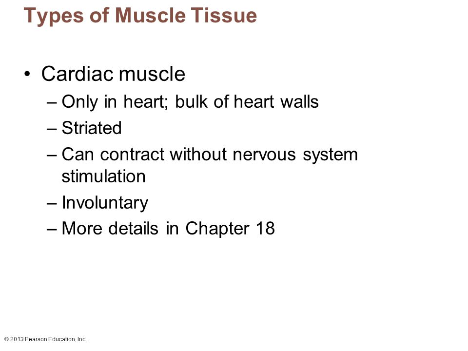 Types of Muscle Tissue Cardiac muscle
