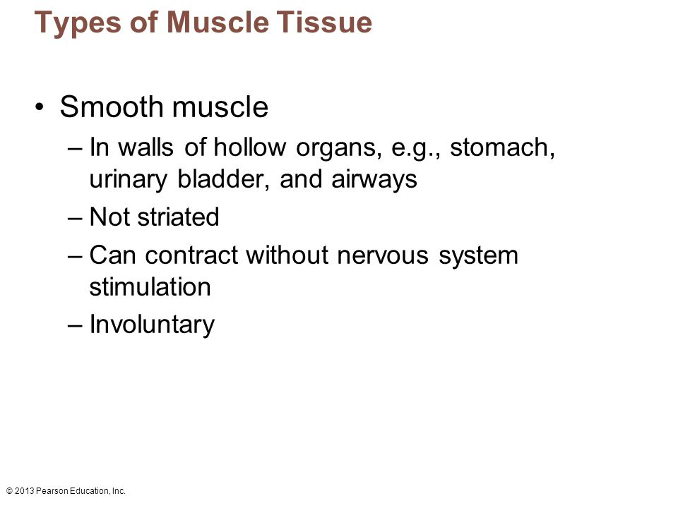 Types of Muscle Tissue Smooth muscle
