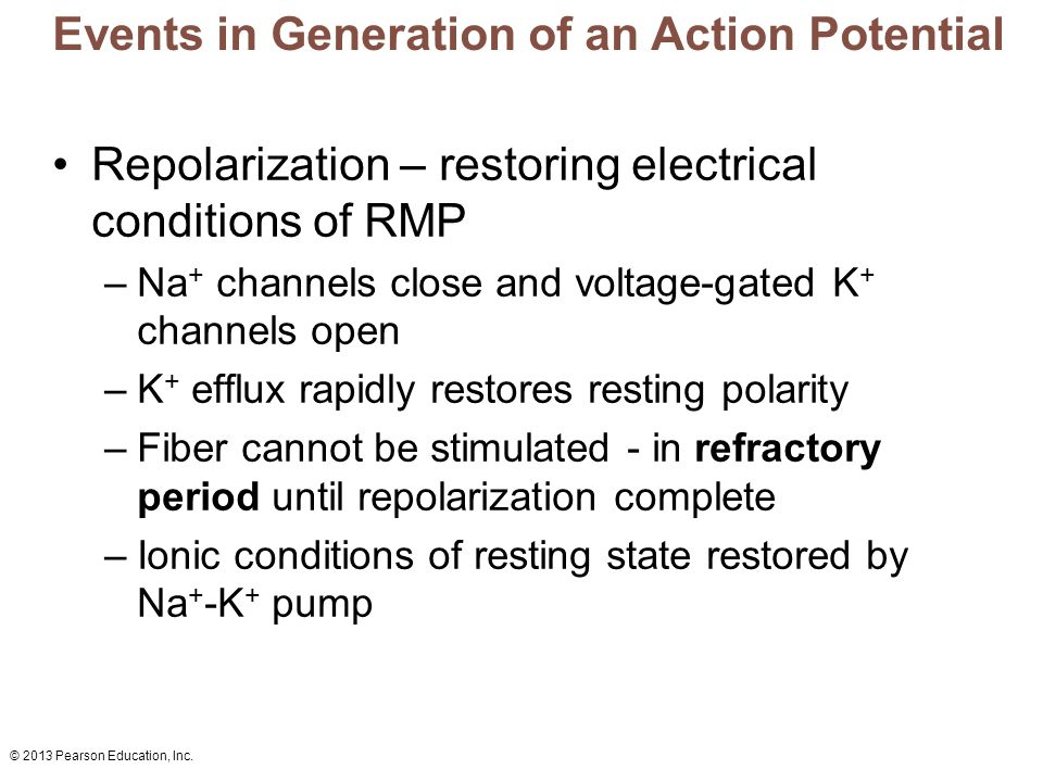 Events in Generation of an Action Potential