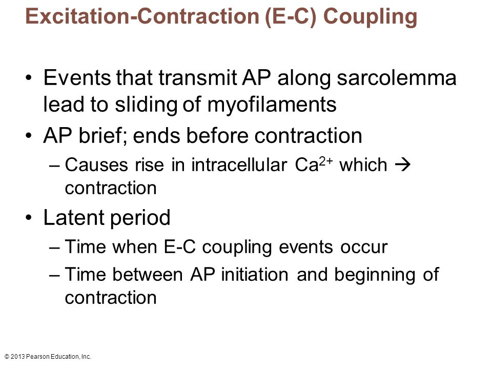 Excitation-Contraction (E-C) Coupling