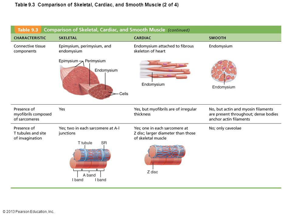 Table 9.3 Comparison of Skeletal, Cardiac, and Smooth Muscle (2 of 4)