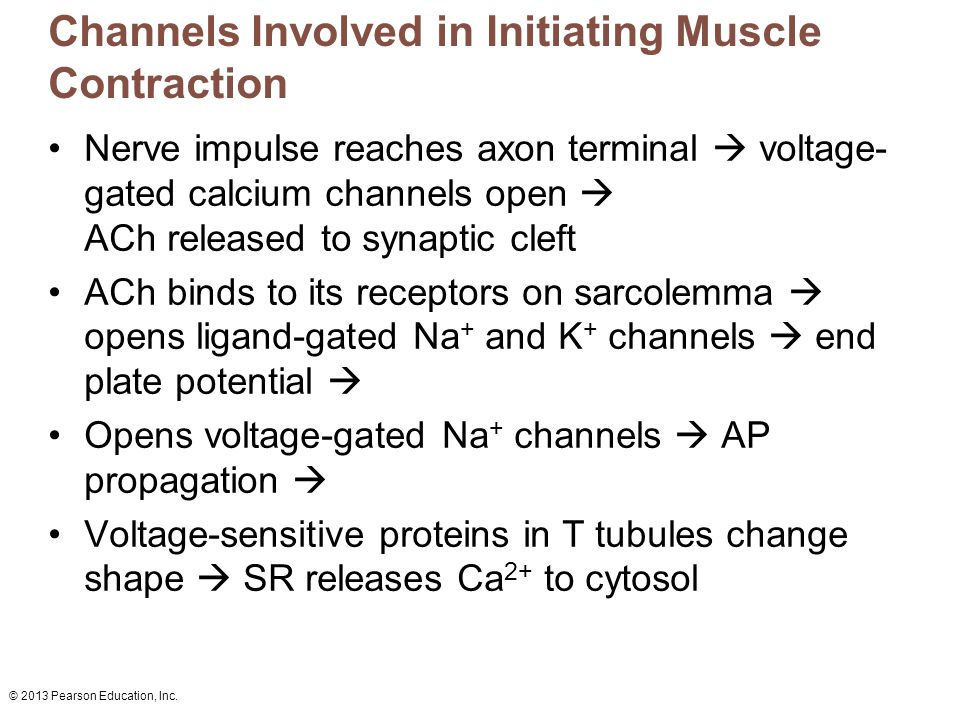 Channels Involved in Initiating Muscle Contraction