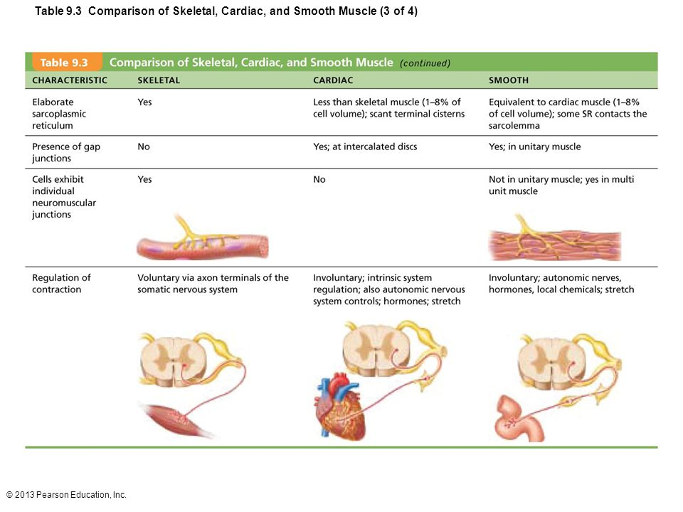 Table 9.3 Comparison of Skeletal, Cardiac, and Smooth Muscle (3 of 4)