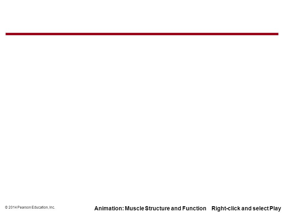 Animation: Muscle Structure and Function Right-click and select Play