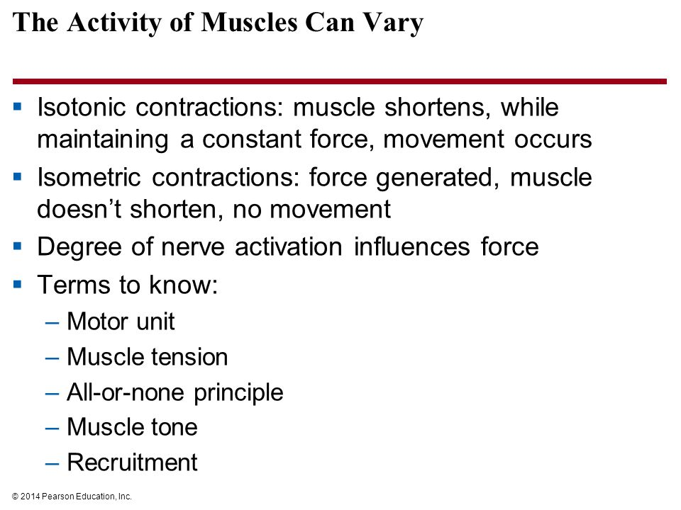 The Activity of Muscles Can Vary