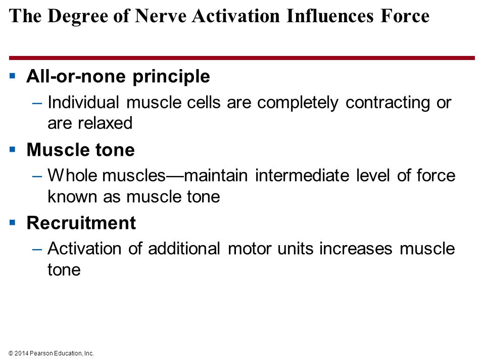 The Degree of Nerve Activation Influences Force