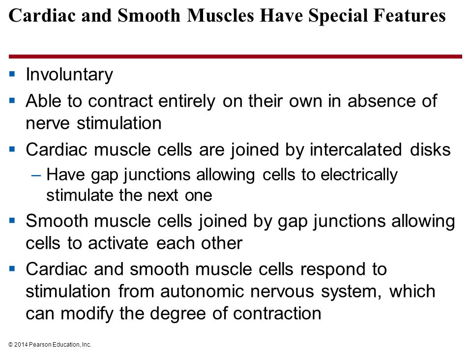 Cardiac and Smooth Muscles Have Special Features