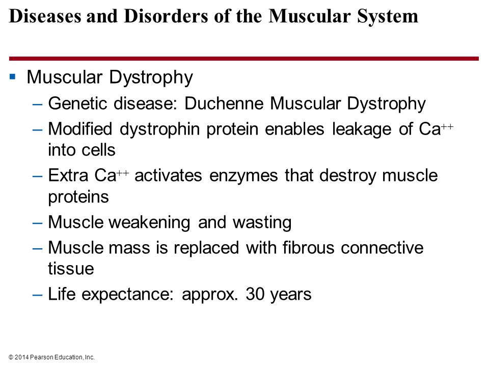 Diseases and Disorders of the Muscular System