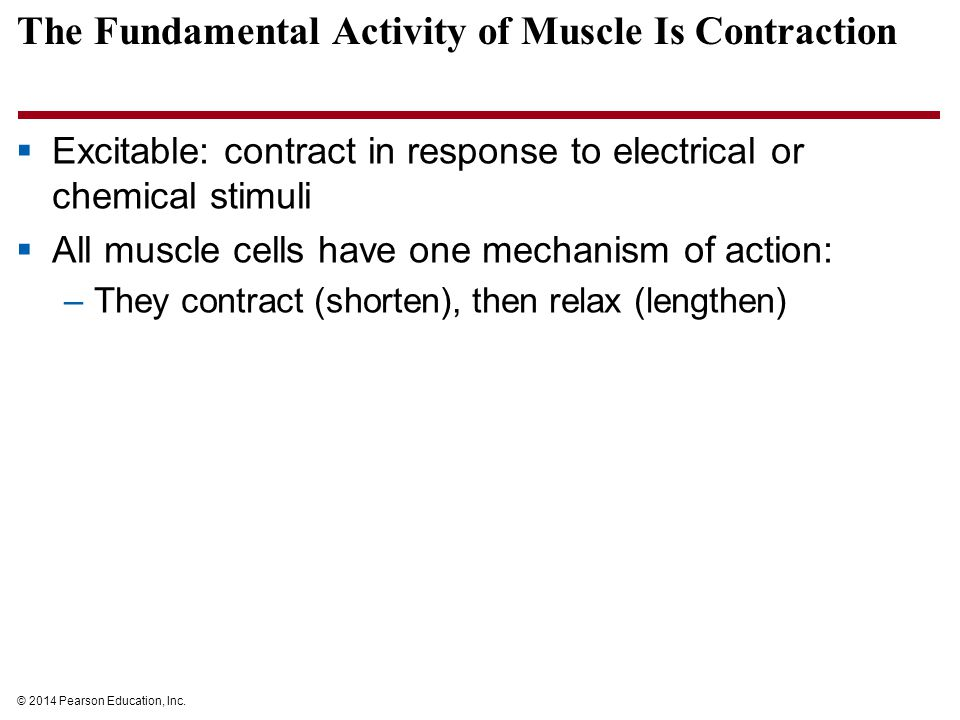 The Fundamental Activity of Muscle Is Contraction