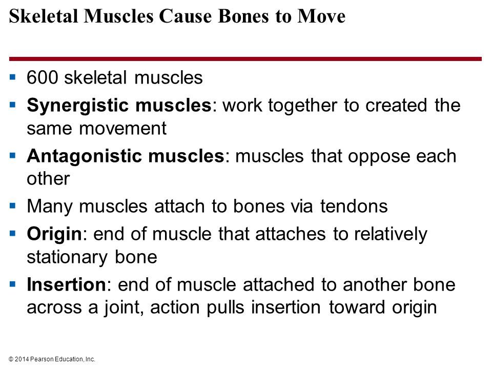 Skeletal Muscles Cause Bones to Move