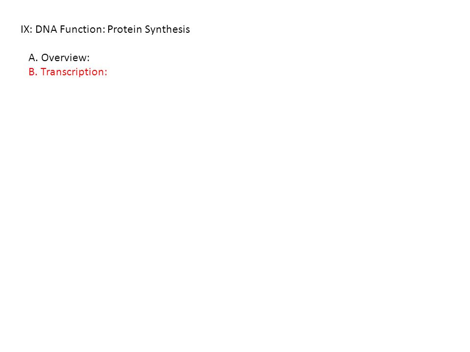 IX: DNA Function: Protein Synthesis