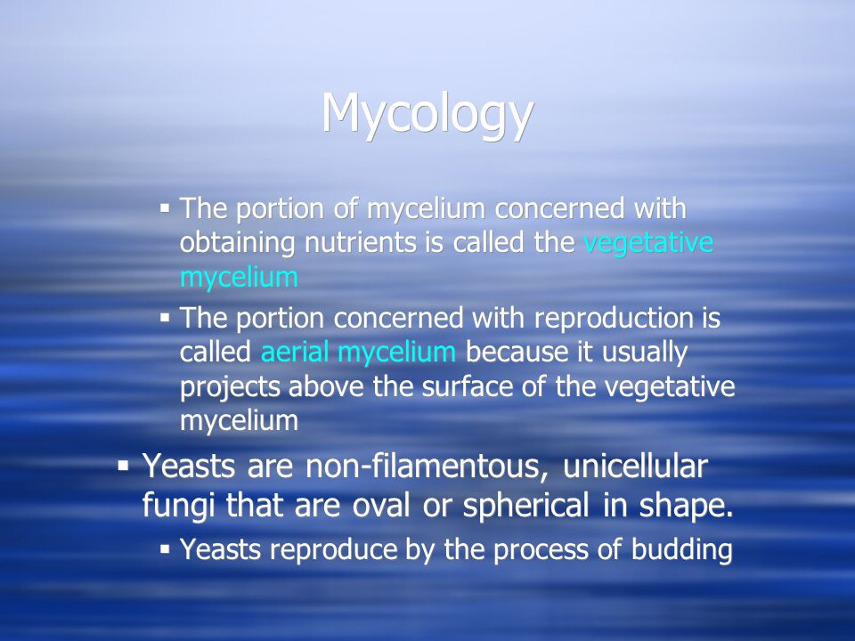 Mycology The portion of mycelium concerned with obtaining nutrients is called the vegetative mycelium.