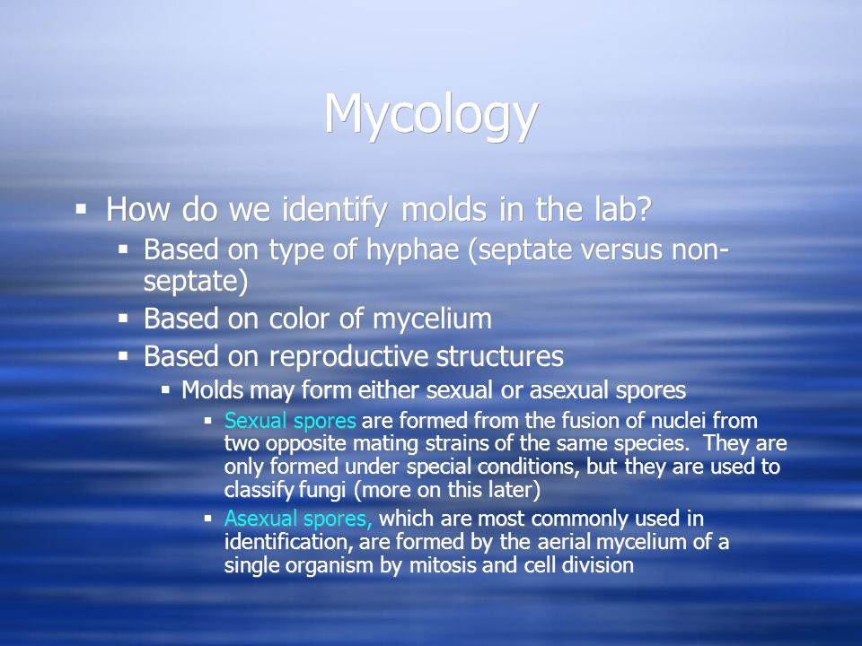 Mycology How do we identify molds in the lab