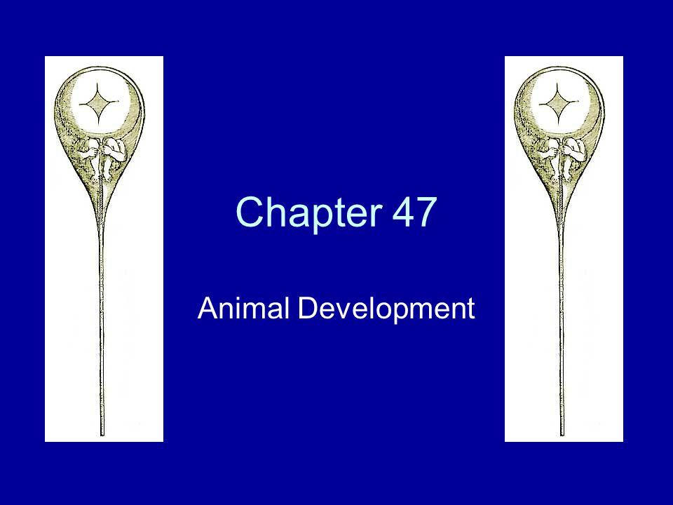 Chapter 47 Animal Development