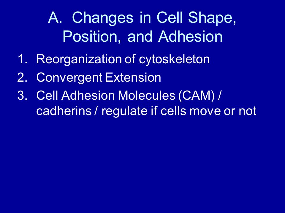 A. Changes in Cell Shape, Position, and Adhesion