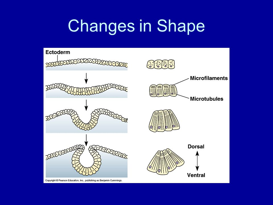 Changes in Shape