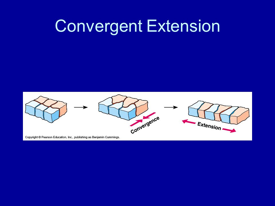 Convergent Extension