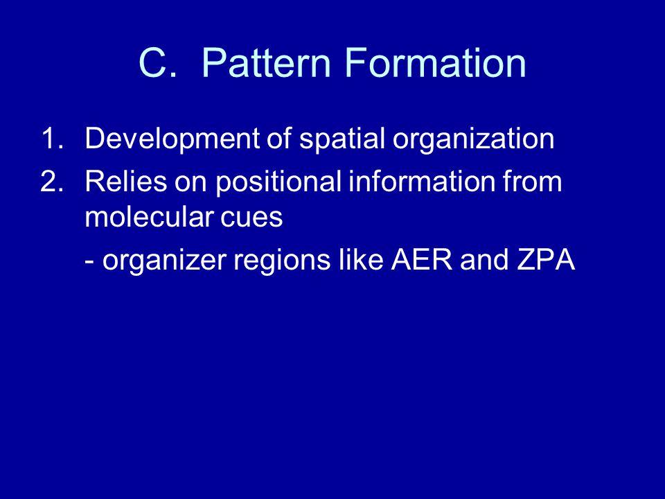 C. Pattern Formation Development of spatial organization