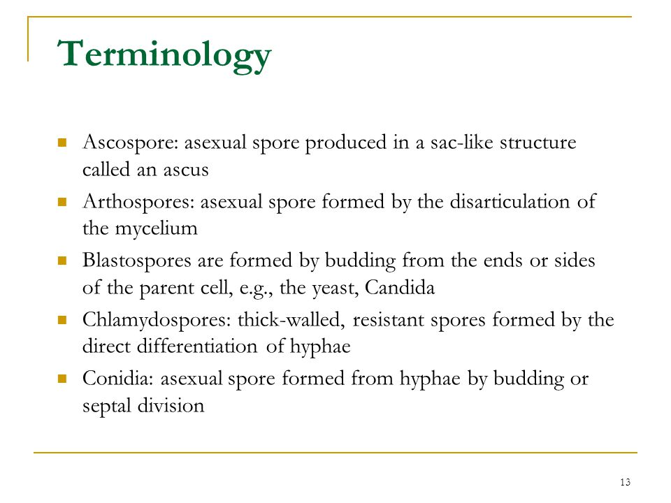 Terminology Ascospore: asexual spore produced in a sac-like structure called an ascus.