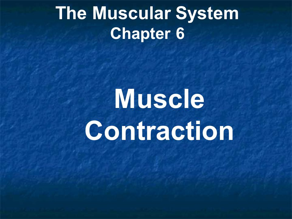 The Muscular System Chapter 6 Muscle Contraction
