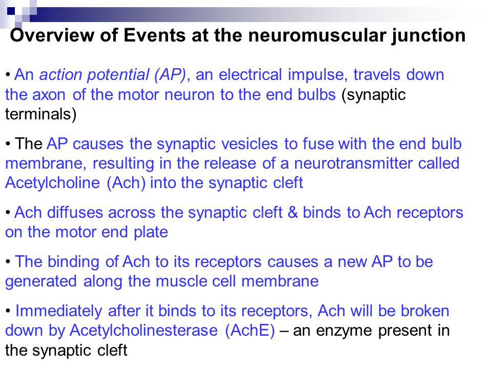 Overview of Events at the neuromuscular junction