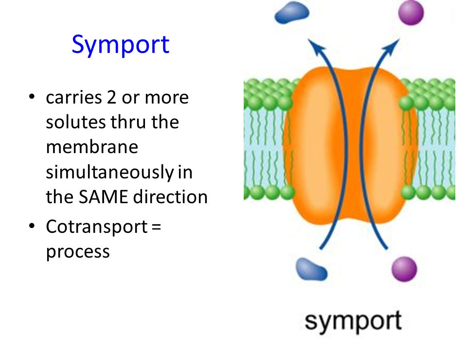 Symport carries 2 or more solutes thru the membrane simultaneously in the SAME direction.