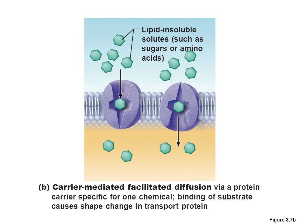 (b) Carrier-mediated facilitated diffusion via a protein