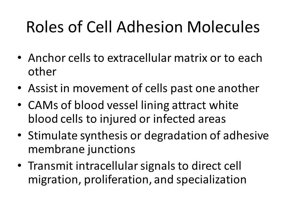 Roles of Cell Adhesion Molecules
