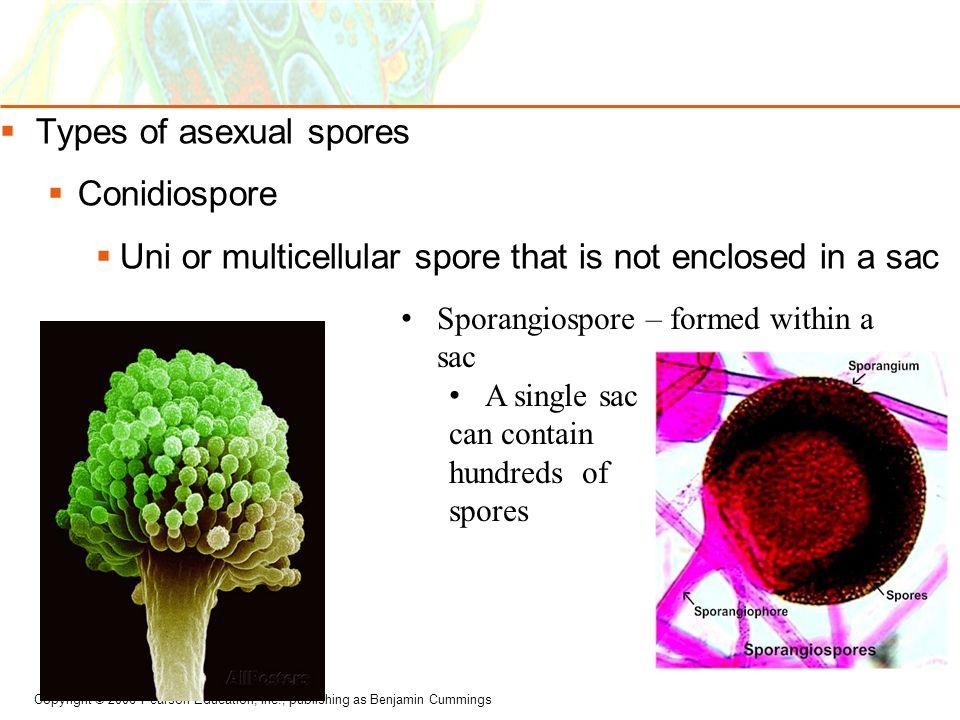Types of asexual spores Conidiospore
