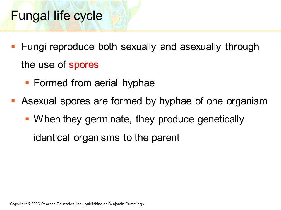 Fungal life cycle Fungi reproduce both sexually and asexually through the use of spores. Formed from aerial hyphae.